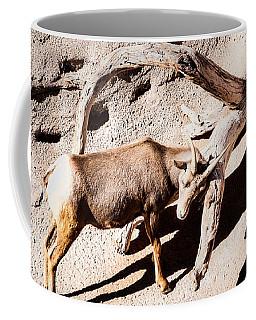 Desert Bighorn Ram Coffee Mug by Lawrence Burry