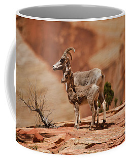 Desert Bighorn Sheep Coffee Mug