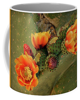 Coffee Mug featuring the photograph Desert Flame by Lucinda Walter