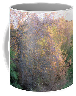 Desert Ironwood Blooming In The Golden Hour Coffee Mug