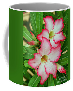 Desert Rose With Buds And Water Coffee Mug by Larry Nieland