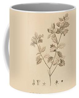 Desfonainia Spinosa Coffee Mug