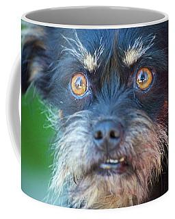 Devil Dog Coffee Mug