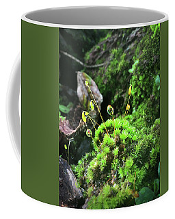 Coffee Mug featuring the photograph Dew Drops On Moss And Sprouts In The Sun by Kelly Hazel