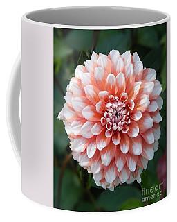 Dahlia Flower- Soft Pink Tones Coffee Mug