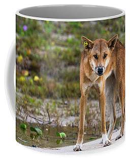 Dingo On 75 Mile Beach, Coffee Mug