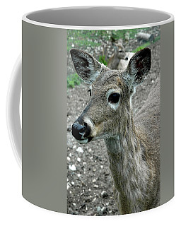 Coffee Mug featuring the photograph Doe Eyes by LeeAnn McLaneGoetz McLaneGoetzStudioLLCcom