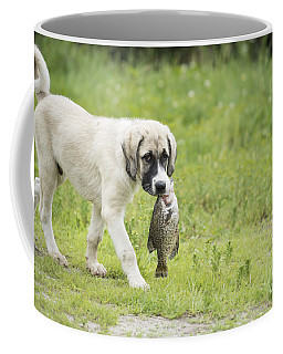 Dog Gone Fishing Coffee Mug
