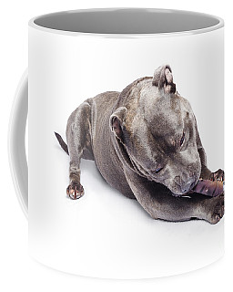 Coffee Mug featuring the photograph Dog Eating Chew Toy by Jorgo Photography - Wall Art Gallery
