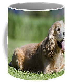 Dog Lying Down On The Green Grass Coffee Mug