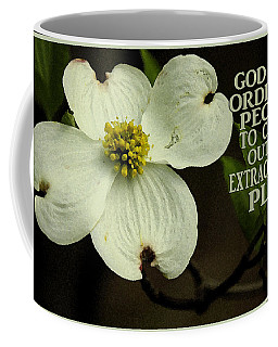 Dogwood Bloom / Flower Coffee Mug by James C Thomas