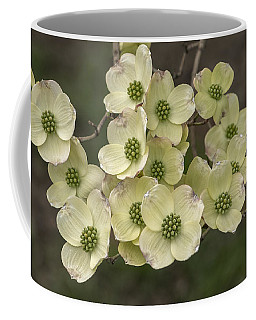 Dogwood Dance In White Coffee Mug
