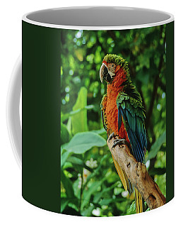 Coffee Mug featuring the photograph Don't Ruffle My Feathers by Marie Hicks