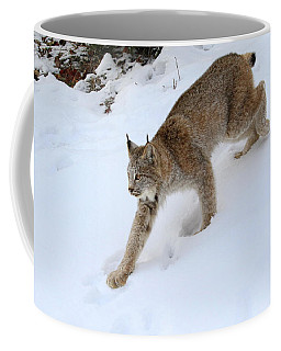Coffee Mug featuring the photograph Down Hill Lynx by Steve McKinzie