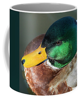 Coffee Mug featuring the photograph Drake by Mark Mille