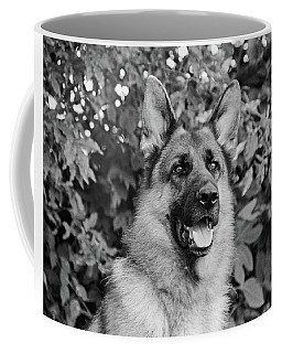 Coffee Mug featuring the photograph Drake Watching by Sandy Keeton