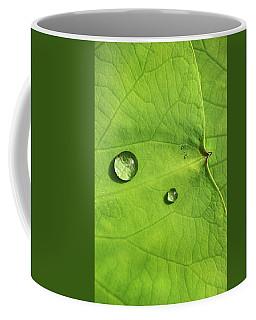 Drops On Water Lily Pads Coffee Mug