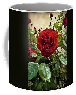 Dublin Bay Climbing Rose Coffee Mug