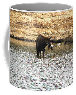 Ducks - Moose Rollinsville Co Coffee Mug