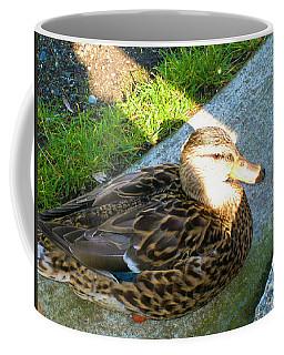 Duck Melanie Tweed In  The Sun Coffee Mug