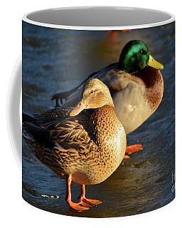 Duck Pair Sunbathing On Frozen Lake Coffee Mug
