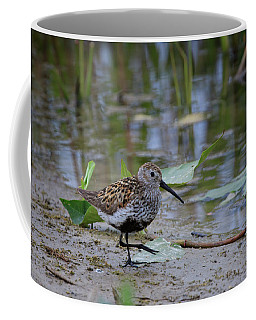 Coffee Mug featuring the photograph Dunlin 2 by Gary Hall