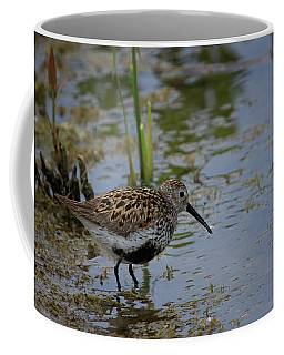 Coffee Mug featuring the photograph Dunlin 3 by Gary Hall