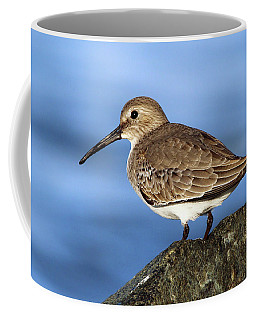 Dunlin Westhampton New York Coffee Mug