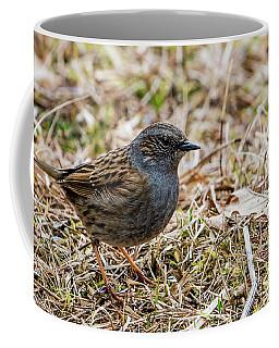 Dunnock Coffee Mug by Torbjorn Swenelius