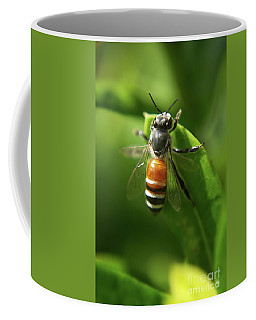 Dwarf Honey Bee Coffee Mug by Michelle Meenawong