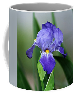 Dwarf Iris 9834_2 Coffee Mug