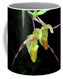 Coffee Mug featuring the photograph Dynamic Duo by Mariarosa Rockefeller