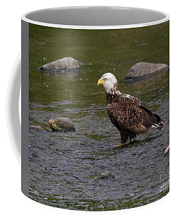 Coffee Mug featuring the photograph Eagle Deep In Thought by Debbie Stahre