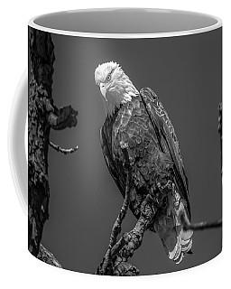 Eagle High In Tree Coffee Mug by Ray Congrove