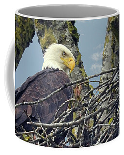 Coffee Mug featuring the photograph Eagle In Nest by Rod Wiens