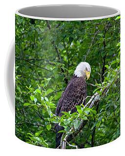 Eagle In The Tree Coffee Mug