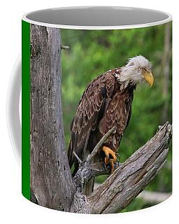 Eagle Point Of View Coffee Mug
