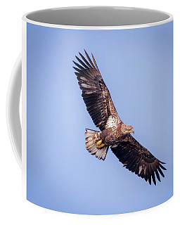 Coffee Mug featuring the photograph Eagle Watch 2018 - Third Year Bald Eagle  by Ricky L Jones