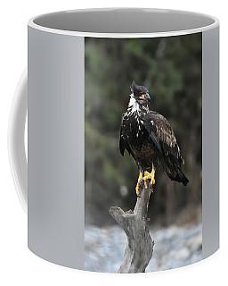 Eagles Perch Coffee Mug