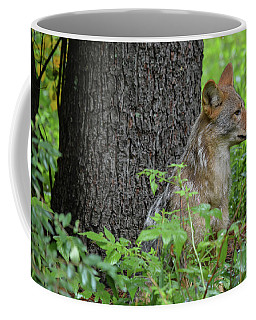 Early Morning Coyote In Maine Coffee Mug