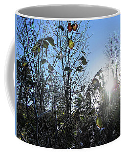 Coffee Mug featuring the photograph Early Morning Sun by Andy Walsh