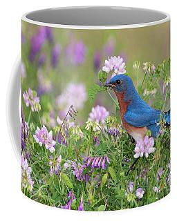 Eastern Bluebird - D010120 Coffee Mug