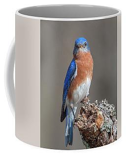 Eastern Bluebird Dsb0300 Coffee Mug