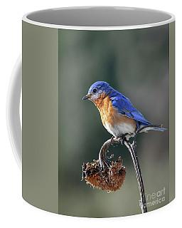 Eastern Bluebird In Spring Coffee Mug