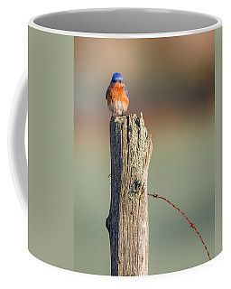 Coffee Mug featuring the photograph Eastern Bluebird Portrait by Bill Wakeley