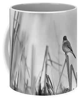 Eastern Phoebe 2017 Coffee Mug by Thomas Young