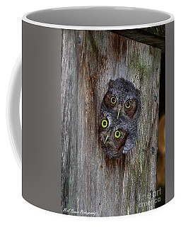 Eastern Screech Owl Chicks Coffee Mug