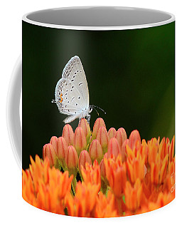 Eastern Tailed Blue On Butterfly Weed Coffee Mug