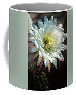 echinopsis candicans - The Argentine Giant  Coffee Mug