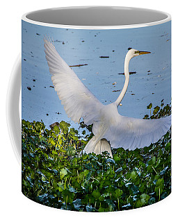 Coffee Mug featuring the photograph Egret With Wings Spread by Randy Bayne